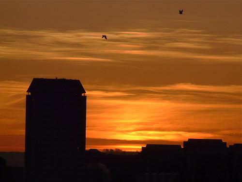 Sunrise over the Isle of Dogs