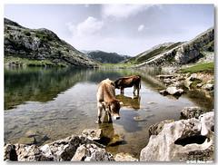 Picos_europa_lago_enol03 (vmribeiro.net) Tags: parque españa lake mountains landscape lago spain espanha europa asturias enol nacional montanhas picos naturesfinest abigfave superbmasterpiece