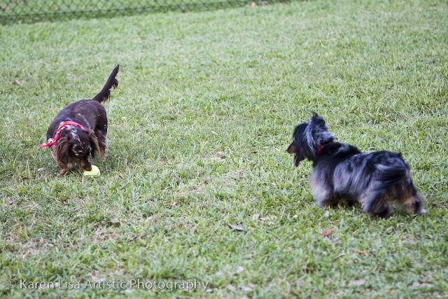 Boscoe & Maya playing