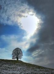 Veiglberg (Claude@Munich) Tags: tree silhouette geotagged bayern bavaria lime bume baum basswood linde tilia claudemunich veiglberg egling geo:lat=47920426 geo:lon=11496291