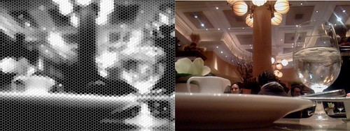 what the cockroach might see, and what the iphone saw
