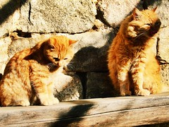 Famille chat (freddylyon69) Tags: famille france chat weekend mur ardeche chattons
