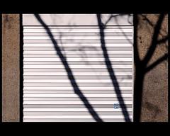 l l s (Dreamer7112) Tags: light shadow lines schweiz switzerland nikon europe closed shadows suisse suiza zurich shopwindow shadowplay zürich svizzera zuerich shopwindows lls d300 zurigo theperfectphotographer nikond300