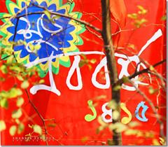 Shuvo Noboborsho : Happy Bangla Newyear (Shabbir Ferdous) Tags: woman wonderful women colours photographer bangladesh bengali bangladeshi pohelaboishakh april14 noboborsho canoneosrebelxti shuvonoboborsho poilaboishakh shabbirferdous banglacalendar happybanglanewyear banglagirls bdgirls celebrationinbangladesh sigmazoomtelephoto70300mmf456apodgmacro wwwshabbirferdouscom shabbirferdouscom