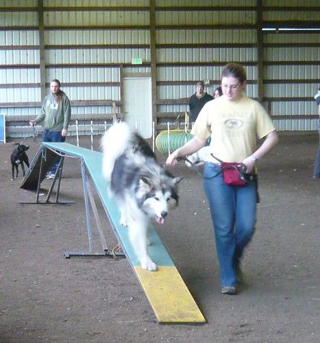 Trooper Agility Training