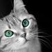 ネコ:arianna