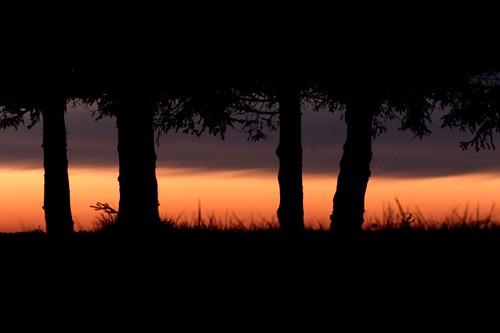 2008-05-16-Trees-01