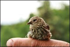 Bird Bokeh (CrzysChick) Tags: portrait bird nature birds animal wings dof little bokeh wildlife small beak feathers tiny animala supershot