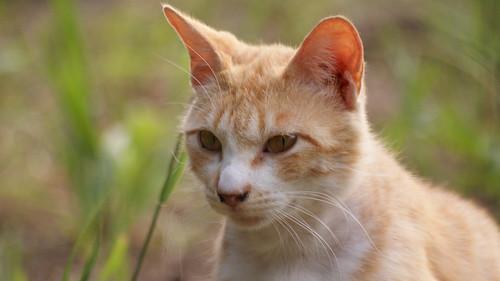 ネコだって、好きで捨てられているのではないのよ