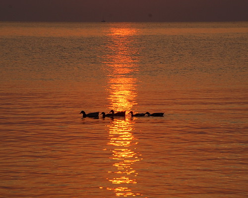 Ducks in the Dawn Light