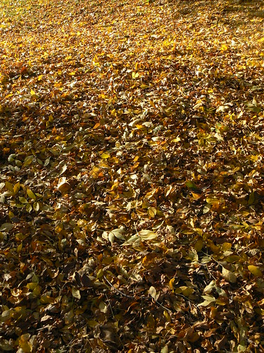 Can you just hear the crunching leaves?