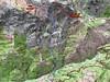 Carte du versant Nord du Migliarellu avec la Cardiccia et les itnéraires de montée depuis Bussu
