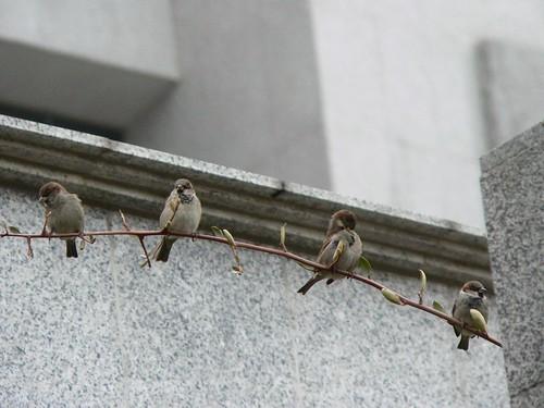 cuatro pájaros de cuenta sobre una caña que tiembla