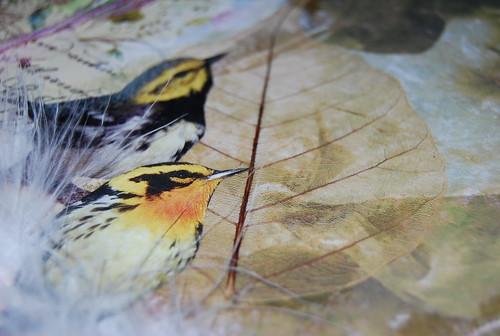 Detalle pájaros