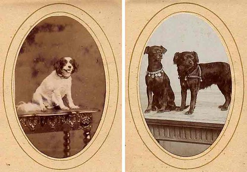 Deya and Rinus, 19th century pets by docman.