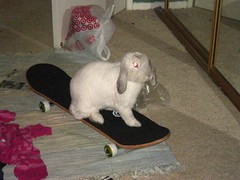 Ocha on a skateboard