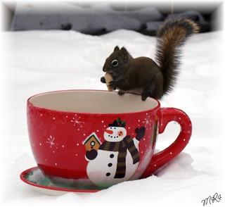 Cup of Joy........