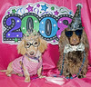 Honey and Teddy are ready to party! (Doxieone) Tags: pink blue party dog pet pets brown tiara cute english dogs hat photoshop glasses interestingness long chocolate year cream newyear dachshund explore honey final blonde exploreinterestingness 2008 haired happynewyear mostpopular coll ggg 1002 longhaired final1 honeydog topfavorite explored englishcream princeshoney princeted 210182008102 ddate