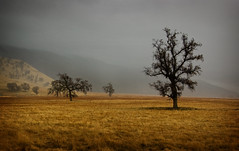 Gold and Gray (sandy.redding) Tags: california landscape anawesomeshot tokinaatx124prodx diamondclassphotographer flickrdiamond shotwithmikebyrne 7pointsystemforphotoshop