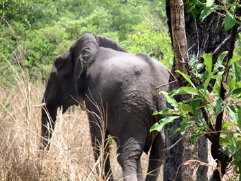Elephants of Cameroon show wildlife preservation online by judy_breck.