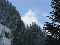 Trees, snow, sky, clouds
