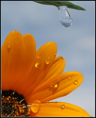 Gone with the wind (butacska) Tags: naturesfinest impressedbeauty excapturemacro