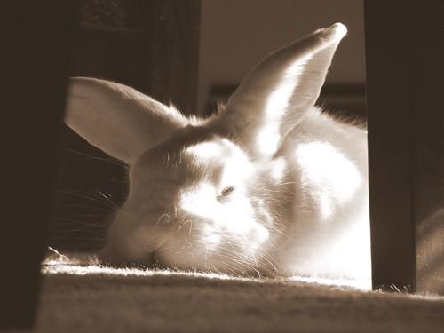 the sleepiest bun
