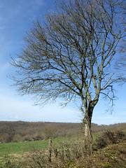 arbre nu fuji finepix 6500 (e-perefocale) Tags: nature nikon nu finepix nikkor arbre 1685 6500 d80