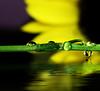 sunflower reflection (jodi_tripp) Tags: flower macro reflection nature water floral rain purple flood drop sunflower refraction joditripp challengeyouwinner spring2008 wwwjoditrippcom photographybyjodtripp