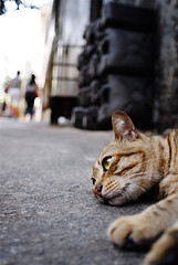 I'm not as happy as I look (Lefty | www.EXQUIS.com.hk) Tags: hk animal cat hongkong day d200  onthefloor sheungwan 20mmf28 flickrsbest