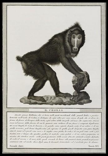 Baron Von Nicolas Henri Jacob - Storia Naturale Delle Scimie 1812