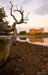 Reaching (Sean Bolton (no longer active)) Tags: tree castle wales dead reaching cymru pembrokeshire carew seanbolton ffotocymrucouk goldstaraward