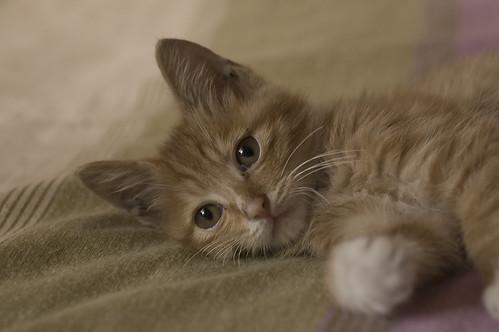 週末啦の蛋友當家,一日一貓:朋友在我家寄放一晚的小貓