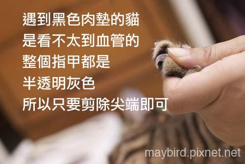 DSC_0287 copy.jpg