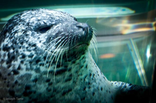 asahiyama_zoo-seal_5998