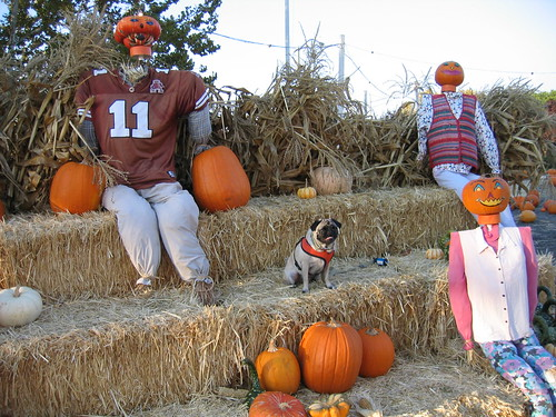 With the Scarecrows