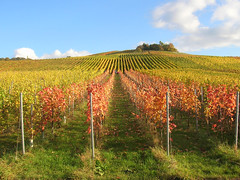 vineyards in autumn (Axxolotl) Tags: autumn sky fall nature colors leaves automne germany season landscape deutschland vines colorful colours laub herbst natur himmel ciel vineyards landschaft bltter farbig vigne myfave bunt feuilles reben wein farben badenwrttemberg badenwuerttemberg weinberge vineleaves multicolore weinbau weinbltter wengert remstal weinstadt remsmurrkreis bwgauswahl schwbischerherbst swabianfall mslandscape