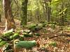 pietre del castelliere del monte Cuk sopra Rodik (elisabetta2005) Tags: slovenia carso rodik castelleire