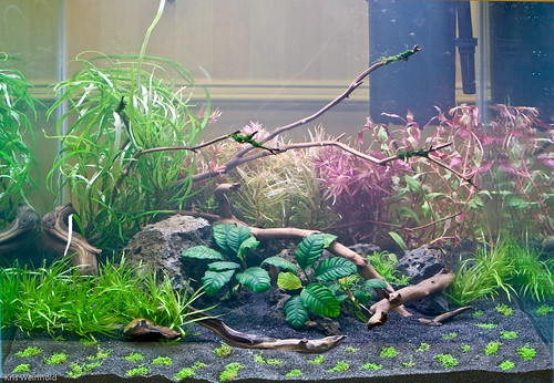 Finished Aquascape