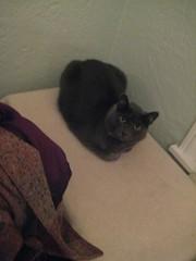 Edgar (dana&david) Tags: party pumpkin kitty
