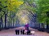 Autumn and the dogs (CVerwaal) Tags: nyc newyorkcity autumn dog newyork dogs canon centralpark walker dogwalker amazingtalent aplusphoto ysplix theunforgettablepictures canong9