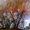 "End of the Autumn!!! (Denis Collette...!!!) Tags: autumn canada reflection art automne river bravo searchthebest quebec rivière reflet vivaldi sauvage themoulinrouge firstquality magicdonkey anawesomeshot ""deniscollette"" «wildriver» theroadtoheaven world100f «santaclaus» «nigelkennedy» «fourseasons» «quatresaisons» «pèrenoël» explorewinnersoftheworld"