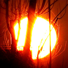 setting sun (*kiwikiss) Tags: trees sunset sun treesilhouette silhouettes settingsun treeonfire