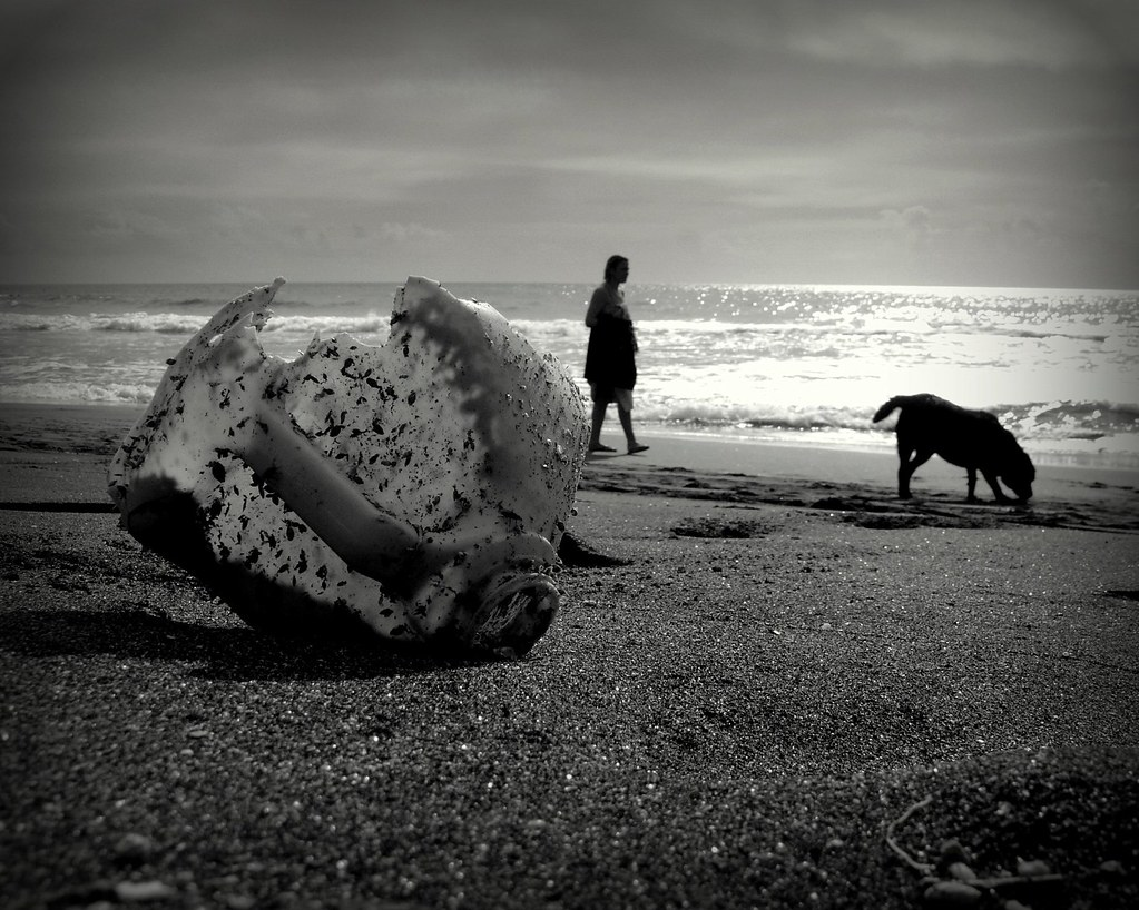 dog in the beach II