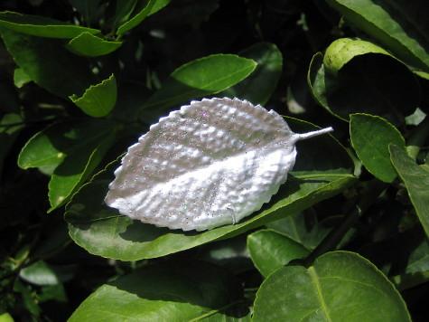 Sparkly leaf