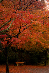 dyed red (takay) Tags: autumn red fall japan bench landscape kyoto   soe fallenleaves beautifulscenery fallscenery autumncolor byodoin  blueribbonwinner  mywinners autumnscenery anawesomeshot superbmasterpiece diamondclassphotographer flickrdiamond takay ysplix theperfectphotographer top20autumn top20vivid