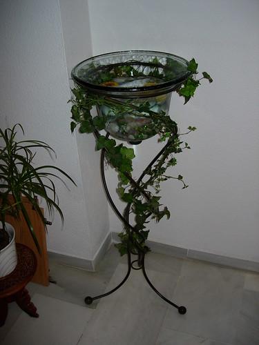 Metáfora de estanque