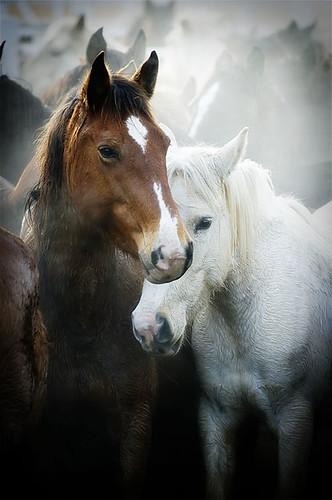 gathering mares 256
