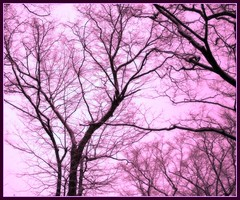 ~*~Ways of Life~*~(^-^) (Queenscents) Tags: morning pink trees winter brown tree nature sign japan flickr purple branches frame fpc blueribbonwinner platinumphoto excellentphotographerawards queenscents
