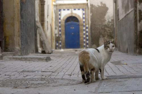 Moroccan Cat 2